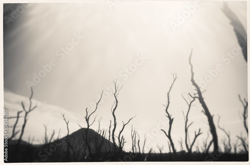 Foto Mountain Landscape With Dead Trees In Foreground