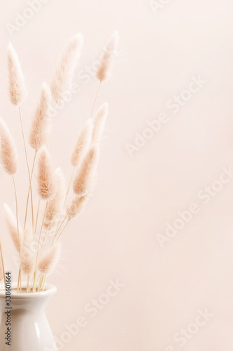 Fototapeta Home interior floral decor. Dried flowers, spikelets in vase on white background.  obraz