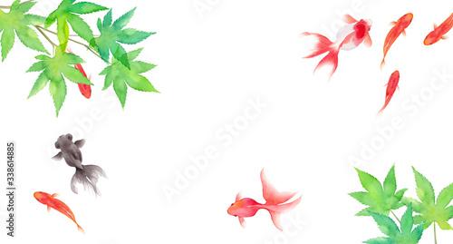 金魚と新緑のモミジで構成した夏のイメージ背景、水彩イラスト、暑中見舞い・お中元バナー背景 Canvas Print