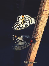 Close-up Of Butterflies On Rusty Metal Rod