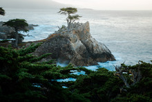 The Lone Cypress Is A Monterey...