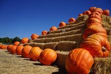 Orange Pumpkins And Hay Bales On Field