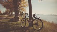 Bike Leaning Against Tree Near Lake