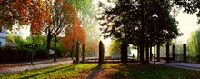 Panoramic Shot Of Columns At Park During Autumn