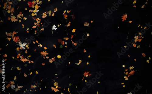 Foto Autumn Leaves Falling Down