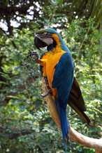 Low Angle View Of Blue And Gold Macaw Perching On Tree