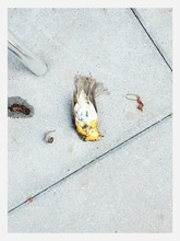 Dead Bird On Sidewalk