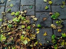 Fallen Leaves On Sidewalk During Autumn
