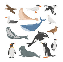 Antarctica Flora. Animals, Birds And Sea Life. Seal, Petrel, Penguins, Albatross, Blue Whale, Sea Leopard, Cape Dove, White Plover, Antarctic Tern Blue-eyed Cormorant Vector Illustration