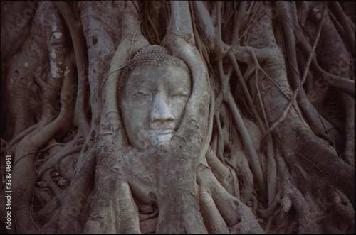 Canvas Head Of Statue In Overgrown Tree Roots