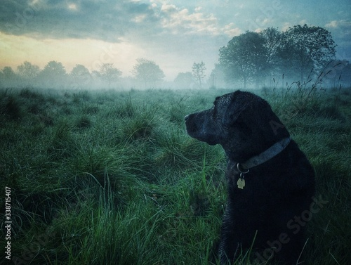Canvas-taulu Dog Sitting On Grassy Field Against Sky