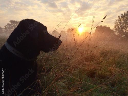 Foto Dog Sitting On Grassy Field Against Sky