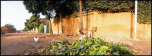 Panoramic View Of Goat And Chickens On Dirt Road By Wall