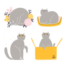 Cute British Shorthair Cat Vector Collection 4