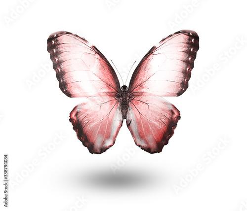 Obraz na plátně Color butterfly , isolated on white background