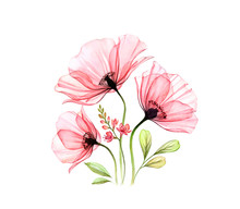 Watercolor Poppy Bouquet. Three Abstract Red Flowers And Fresia Isolated On White. Realistic Hand Painted Artwork With Transparent Petals. Botanical Illustration For Cards, Wedding Design
