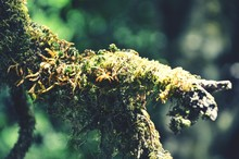 Moss Growing On Branch
