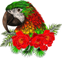 Macaw Parrot Head With Red Flo...