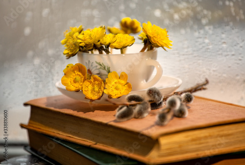 Photo Still life with Adonis flowers