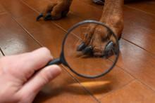 犬の足を虫眼鏡で拡大