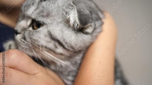 Fotografía family cat, favorite of children