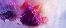 Background Of Fuchsia   Flower...