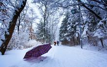 Umbrella On Snow Covered Stree...