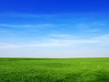 Fototapeta Na sufit - sky and grass backround