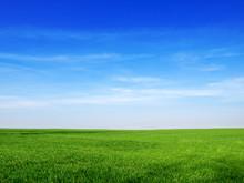 Sky And Grass Backround