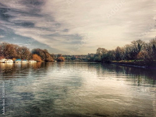 Obraz na płótnie Trees At Lakeshore