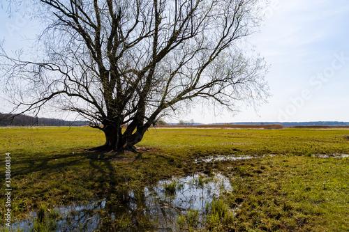 Fototapeta Rzeka Narew. Dolina Górnej Narwi. Wiosna na Podlasiu, Polska obraz