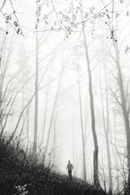 View Of Hiker In Foggy Forest