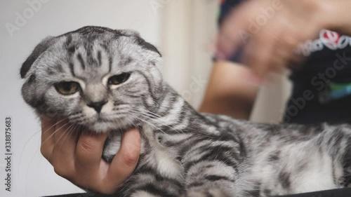 Cuadros en Lienzo family cat, favorite of children