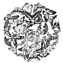 Round Design With Black And White Great Orange-tip, Emerald Swallowtail, Jungle Queens, Plain Tiger, Rajah Brooke's Birdwing, Papilio Torquatus, Swallowtail Butterfly