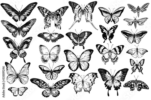 Photo Vector set of hand drawn black and white great orange-tip, emerald swallowtail,