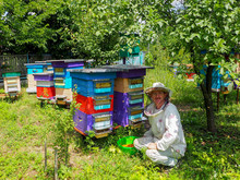 Beekeeper In The Apiary Near The Hives Collects Bright Orange Flower Pollen