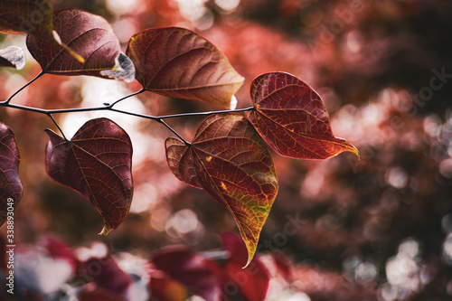 Fototapeta Red Leaves Over Me obraz