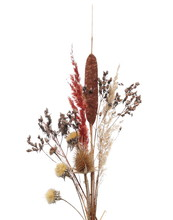 Dry Field Plants: Flowers, Twigs, Branches And Grass With Seeds Isolated On White Background And Texture, Clipping Path