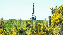 Close-up Of Yellow Gorse Flowers With Tourist In Park