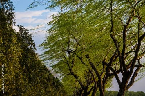 Fotografija Windswept Trees