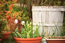 Spring Flowers In Flowerpots I...
