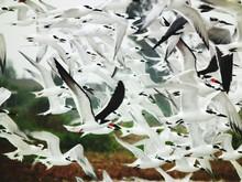 Flock Of Seagulls Flying Over Landscape