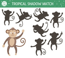 Tropical Shadow Matching Activ...