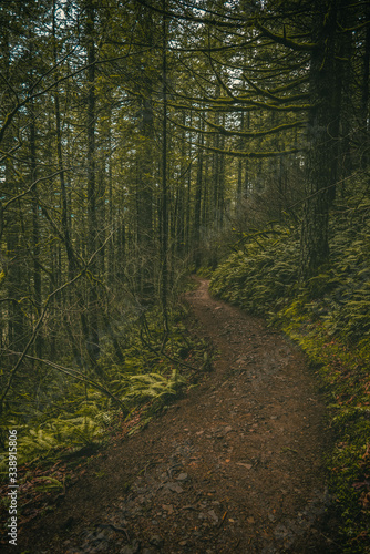 Winding forest trail path through dark lush Oregon forest