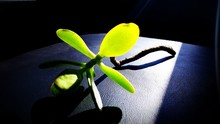 Green Plant In Beam Of Sunlight In Dark Interior