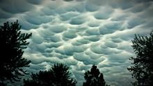 Silhouette Trees Against Mammatus Clouds