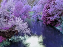 River By Purple Trees