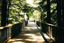 Wooden Footbridge Amidst Trees