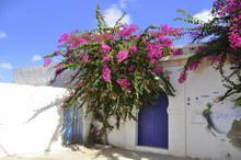 Projekt Djerbahood, Street Art, Djerba Tunezja