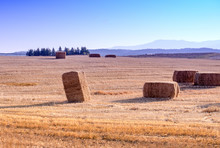 Bales Of Hay In A Golden Field...